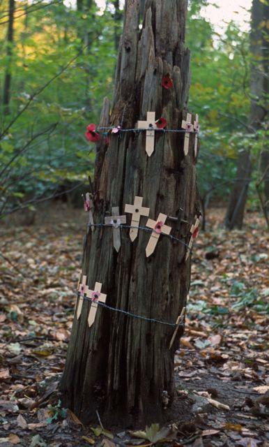 Sanctuary Wood, Flanders